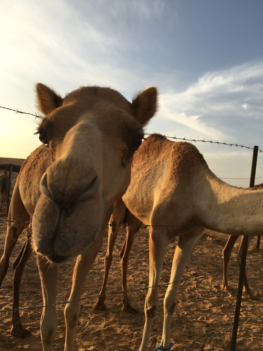 Desert Safari Dubai, Review